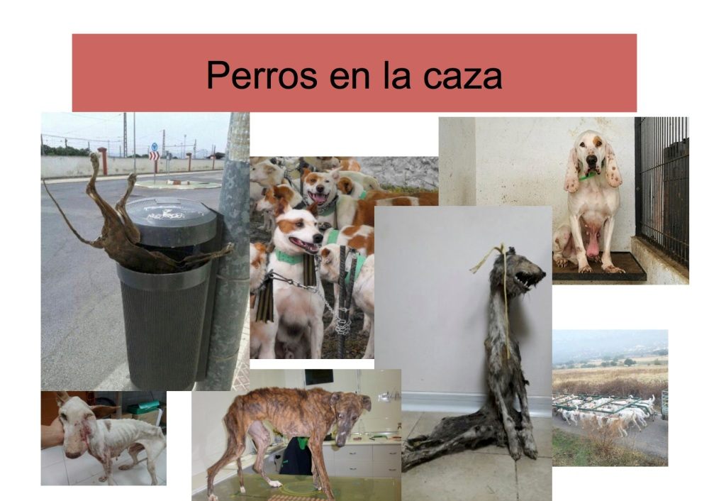 avatma-presentacion-pequenita3