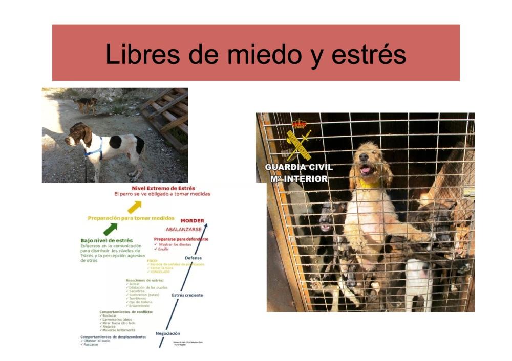 avatma-presentacion-pequenita7