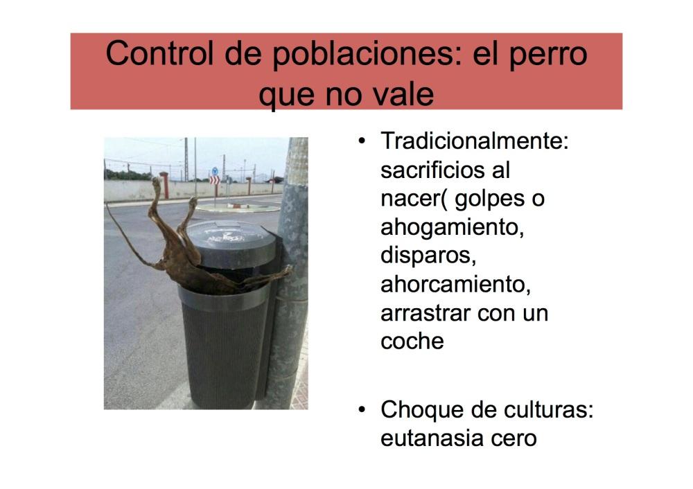 avatma-presentacion-pequenita9