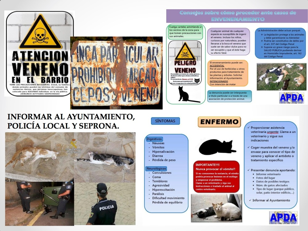 10CHARLA CES BADAJOZ_III congreso de derecho animal de Extremadura
