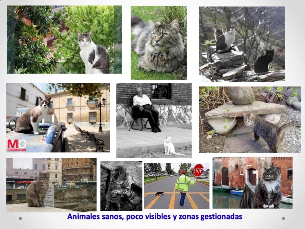 24CHARLA CES BADAJOZ_III congreso de derecho animal de Extremadura