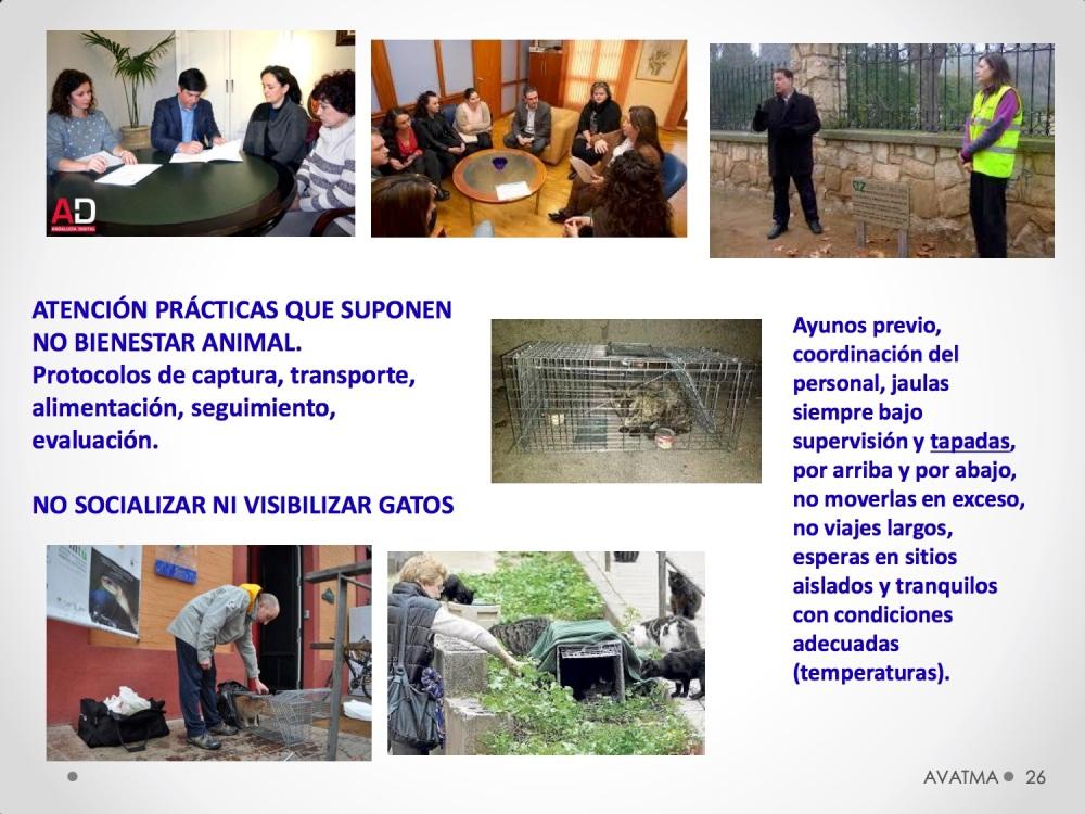 26CHARLA CES BADAJOZ_III congreso de derecho animal de Extremadura