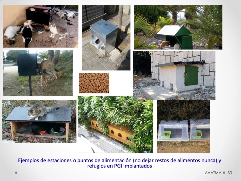 30CHARLA CES BADAJOZ_III congreso de derecho animal de Extremadura
