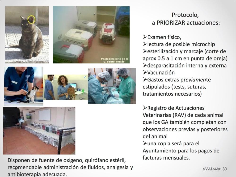 33CHARLA CES BADAJOZ_III congreso de derecho animal de Extremadura