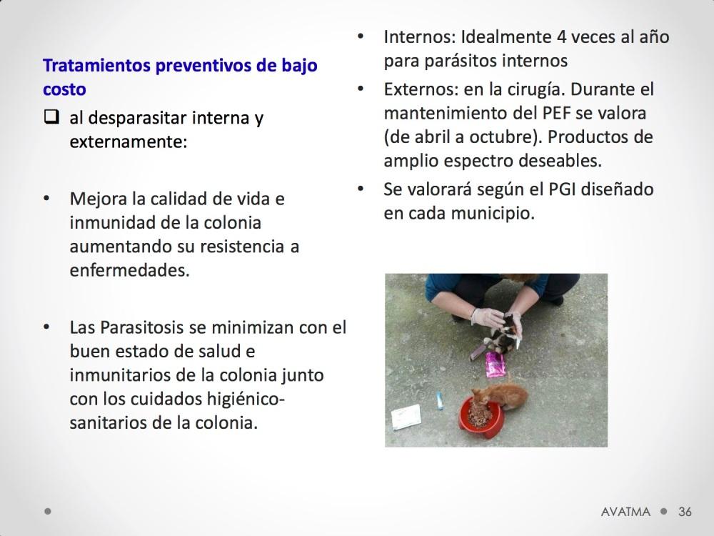 36CHARLA CES BADAJOZ_III congreso de derecho animal de Extremadura