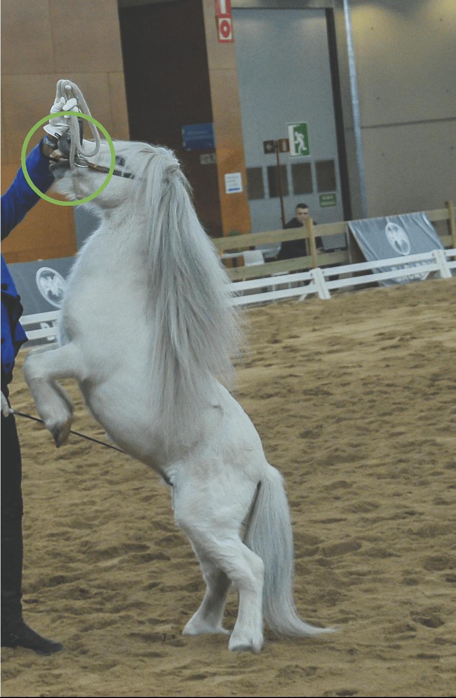 incomodidad del caballo hacia el este