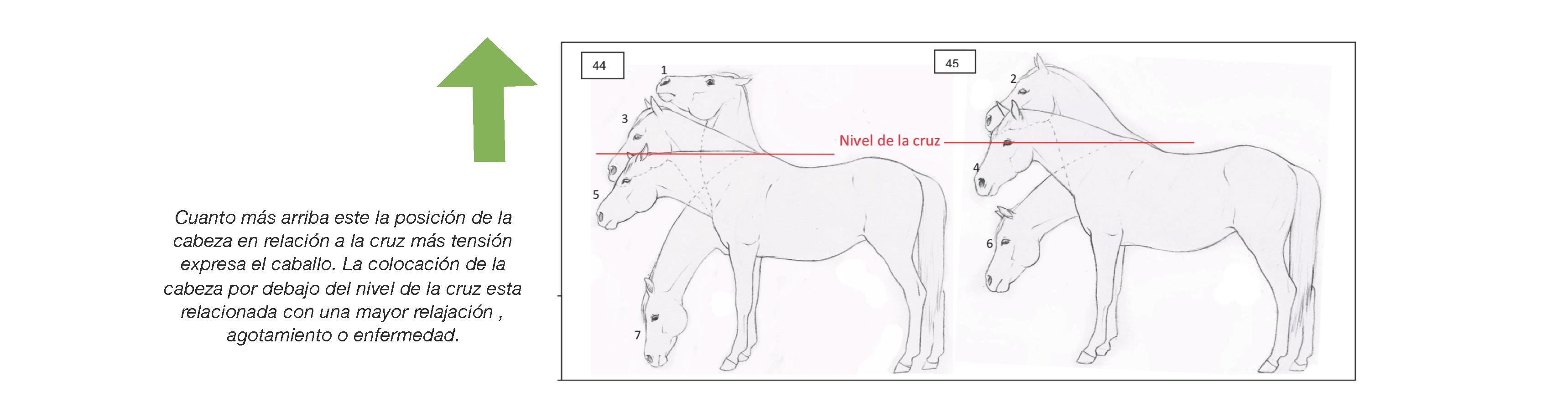 vista del punto de incomodidad del caballo